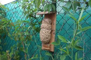 Cob bee hotel, Hungary
