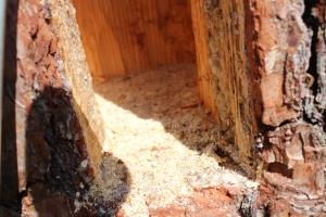 Floor in a honeybee tree beehive - ants and debris - eco floor