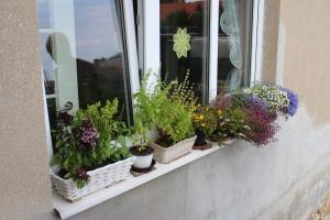 Bee friendly flowers on a windowsill