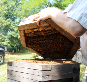 Opening a St Johns Hive, Hungary