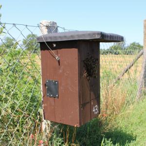 Honeybees inside a bird box, Hungary